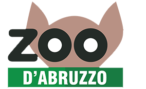zoo abruzzo