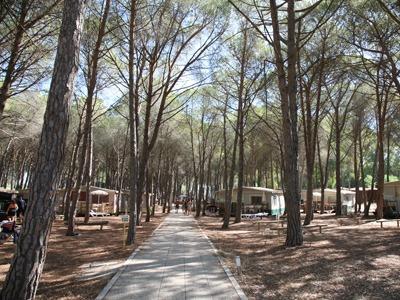 camping-village-spinnaker pineta